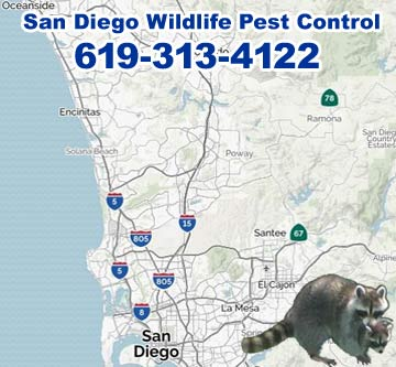 San Diego Animal Control Wildlife Pest Control for Rats Bats